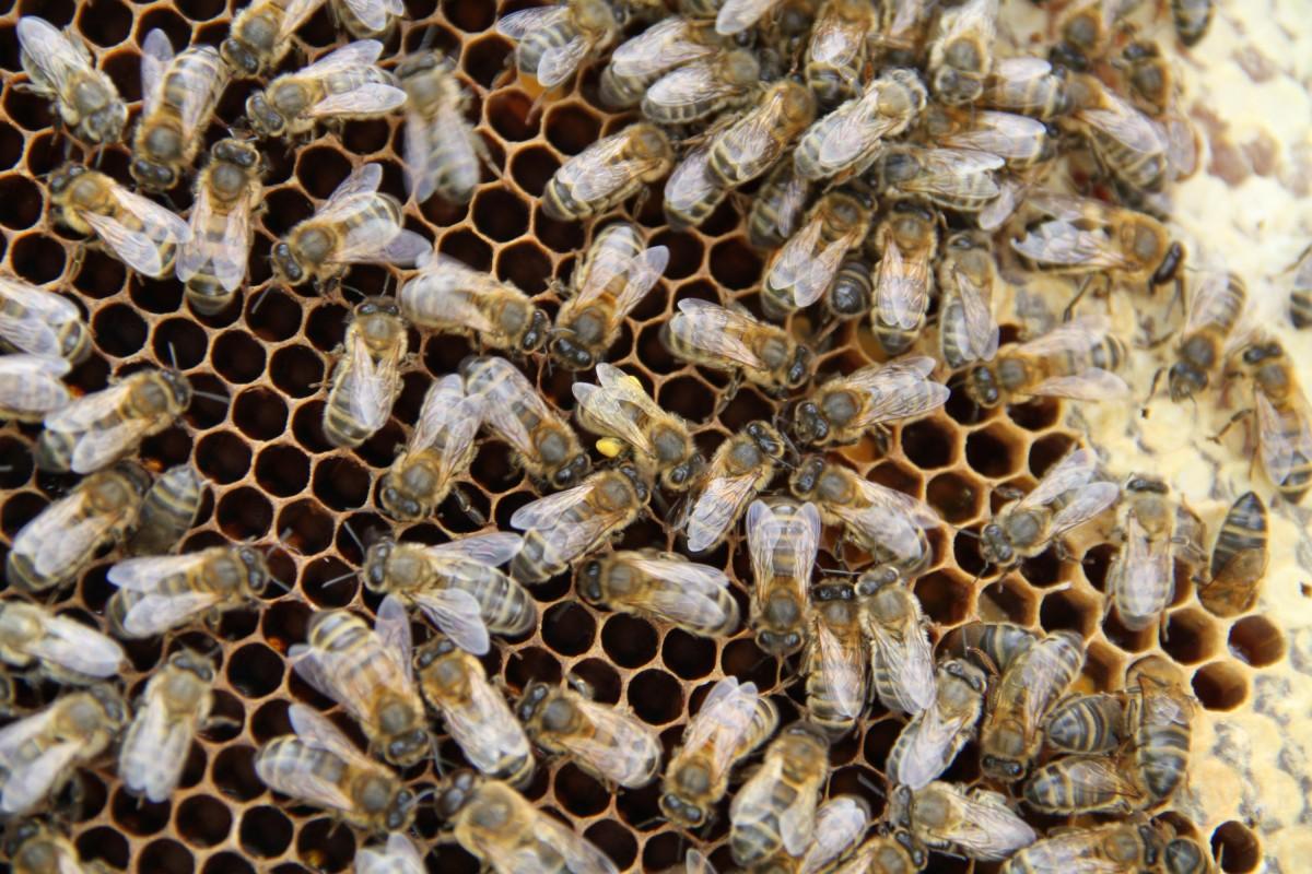 pour sauver les abeilles le panier cauchois. Black Bedroom Furniture Sets. Home Design Ideas